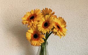 цветы, герберы, желтые