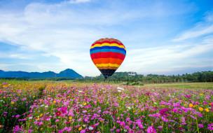 авиация, воздушные шары дирижабли, луг, воздушный, шар, полет, цветы