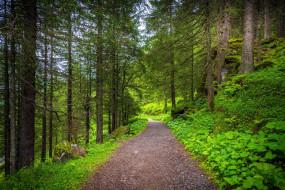 природа, дороги, дорога, лесная
