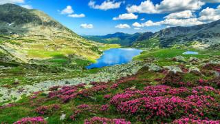 природа, горы, озеро, луг, цветы