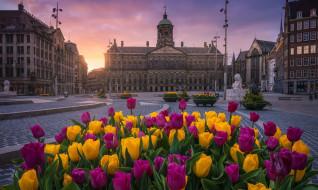 города, амстердам , нидерланды, площадь, цветы, тюльпаны