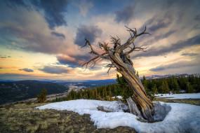 природа, деревья, старое, дерево, снег, лес, колорадо, сша