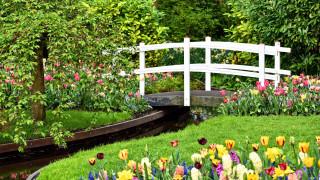 природа, парк, водоем, мостик