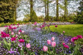 природа, парк, аллея, лужайка, клумба, тюльпаны, весна