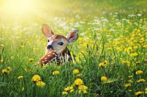 животные, олени, олень, детка, природа, молодой, живая, животное