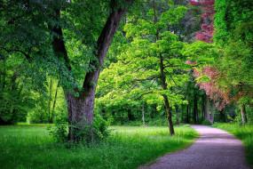 природа, парк, дорожка, деревья, лужайка