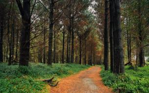 природа, лес, лесная, дорога, сосны
