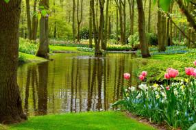 природа, парк, пруд, весна, цветы
