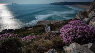 природа, побережье, вечер, скалы, цветы