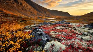 природа, горы, пейзаж, рассвет, скалы, цветы, вода, озеро, облака, небо, трава, желтые, красные, хибины, горный, массив, кольский, полуостров, россия