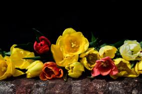 цветы, тюльпаны, весна, природы, букет, красный, флора
