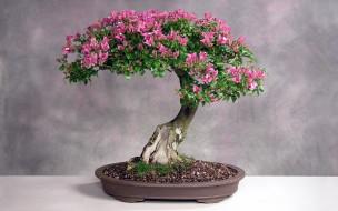 цветы, цветущие деревья ,  кустарники, бонсай