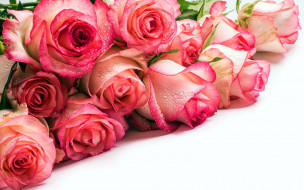 цветы, розы, бутоны, капли