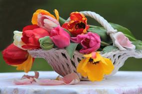 цветы, тюльпаны, тюльпан, цветок, натюрморт, красочный