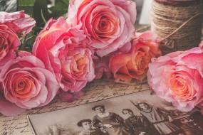 цветы, розы, ностальгия, ретро, винтаж, розовый