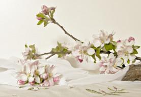 Цветущие Ветки, Цветы, Apple Blossom, Цветение