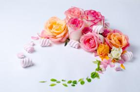 цветы, розы, зефир, бутоны