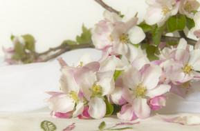 цветы, цветущие деревья ,  кустарники, цветущие, ветки, apple, blossom, цветение