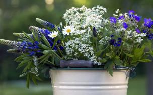 цветы, разные вместе, ромашки, люпин, колокольчики