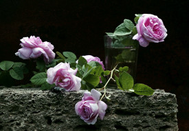 цветы, розы, бутоны