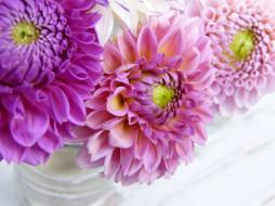 цветы, георгины, розовый, цветник