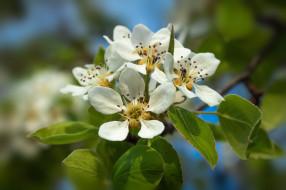 цветы, весна, ленц, пробуждение, природы, росток, дерево