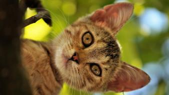 животные, коты, мордочка