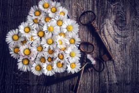 обои для рабочего стола 1920x1280 цветы, ромашки, ключи