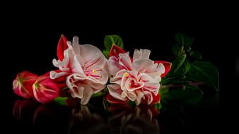 обои для рабочего стола 1920x1080 цветы, фуксия