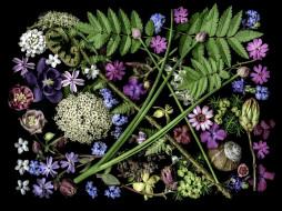 цветы, разные вместе, композиция