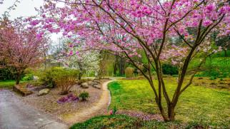 природа, парк, аллеи, деревья, весна, цветение