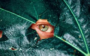 разное, глаза, глаз