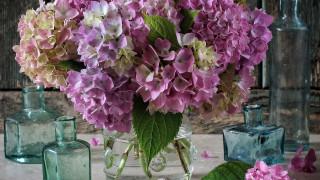 цветы, гортензия, букет