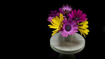 цветы, остеоспермумы, букет