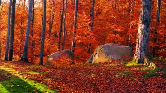 природа, лес, камни, листья, осень