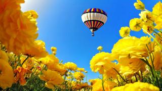 авиация, воздушные шары дирижабли, полет, цветы, шар