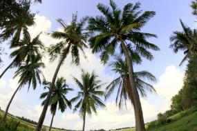 природа, деревья, пальмы