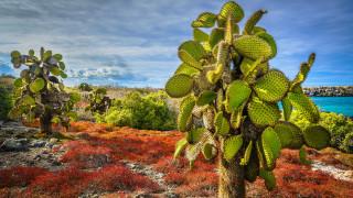 цветы, кактусы, остров, пласа-сур, эквадор