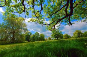 природа, луга, луг, лето