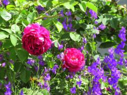 цветы, разные вместе, лето, 2020