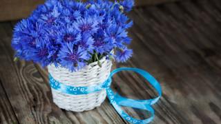 синий, васильки, букет, лента