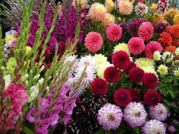 цветы, разные вместе, георгины, гладиолусы