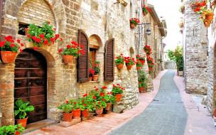 города, - улицы,  площади,  набережные, дома, улица, цветы, бегония