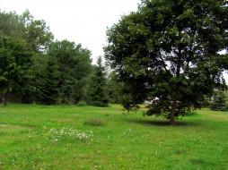 природа, луга, трава, луг, деревья