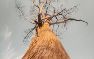 природа, деревья, ствол