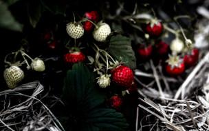 природа, ягоды, клубника