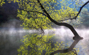 природа, деревья, река, дерево, туман, вода