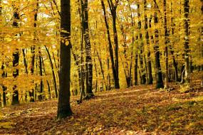 природа, лес, деревья, осень, листопад, листва
