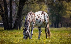 животные, лошади, лошадь, роща, трава