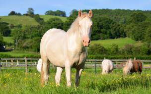 животные, лошади, трава, пастбище, луга, рощи